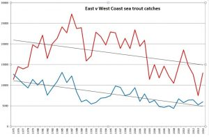 sea trout declines